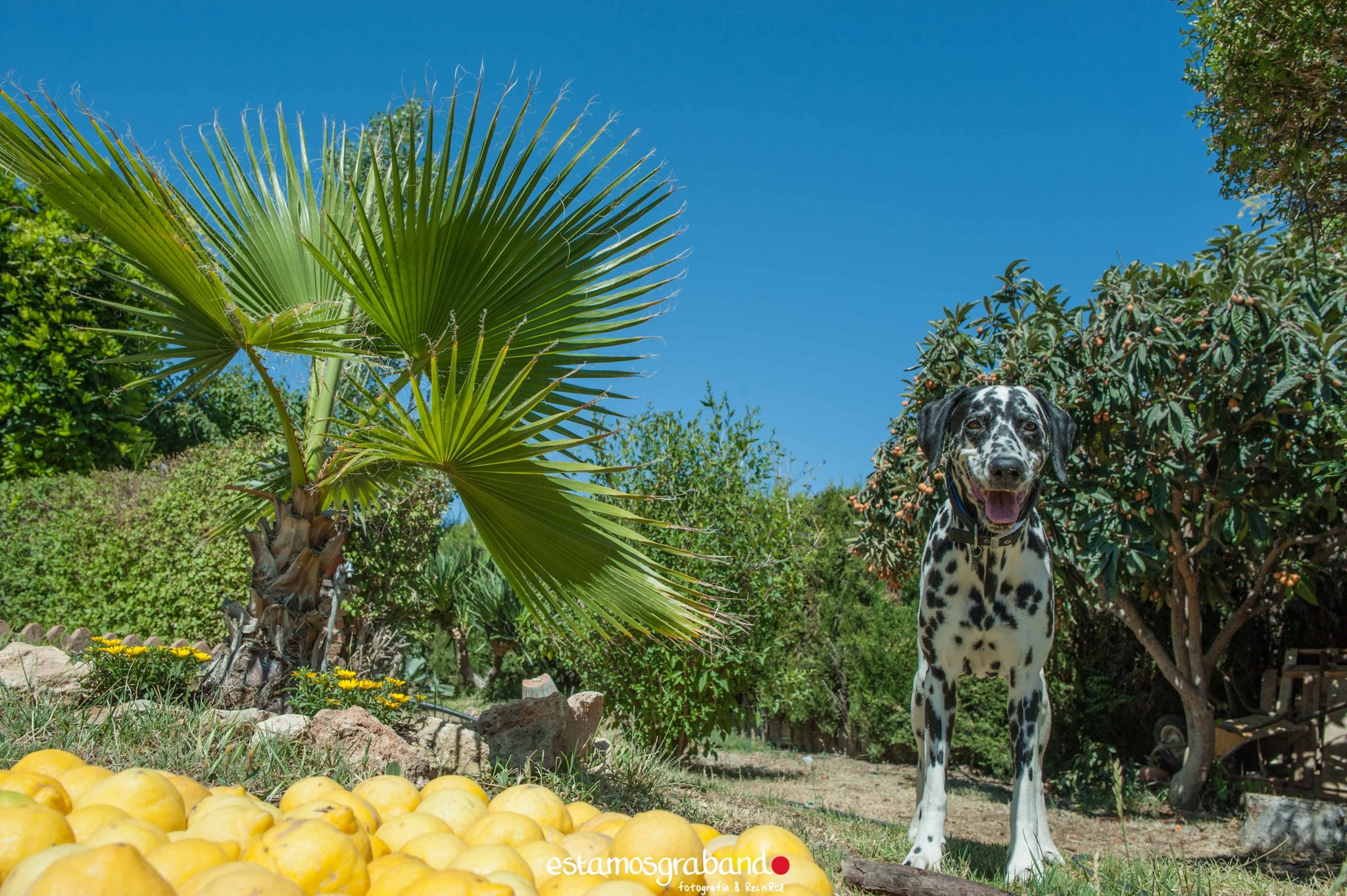 LEO-Y-PEDRO-14 Fotografía de Boda_Leo & Pedro [Jardines de la Mamunia, Granada] - video boda cadiz